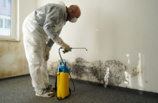 Getting Mold out of Your Home