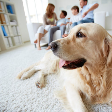 Make Your Home Pet-Friendly