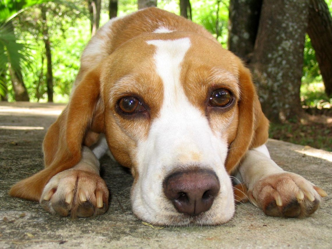 CBD Oil for Pets - What you Need to Know